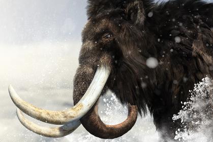 氷点下のもと吹雪のなか目的地に向かって歩く巨大で大きな牙を持つ雄のマンモス