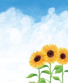 ひまわり ヒマワリ 向日葵 青空 雲 ひまわり畑 夏 花 イラスト 手描き