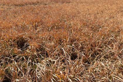 冬の枯れ草の野原