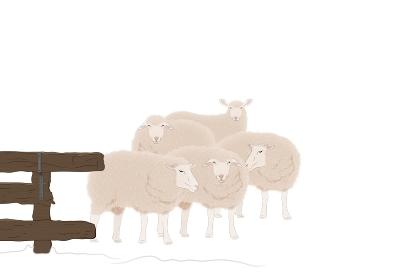 5匹の羊 イラスト