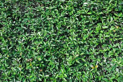 画面いっぱいの小さな葉っぱの壁面