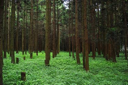 6月の森の風景