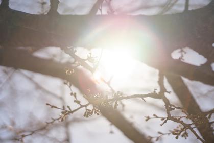 桜の枝から覗く光