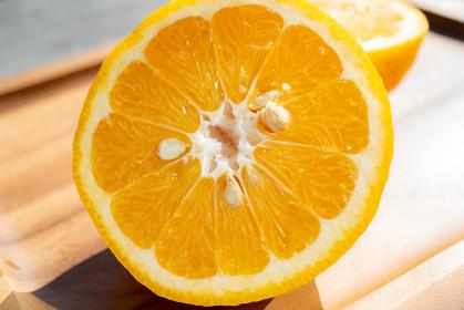 オレンジ みかん 夏みかん