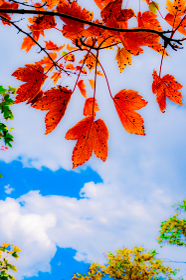鮮やかな紅葉と綺麗な空