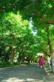 銀杏並木をこちらに向かって歩く黄色い日傘で顔が隠れた赤いワンピースの女性
