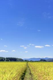 東北の稲作