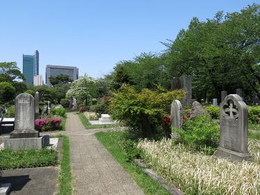 花と新緑が美しい春の青山霊園外人墓地