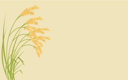 実って首を垂れる稲穂のイラスト、秋の収穫のイメージ