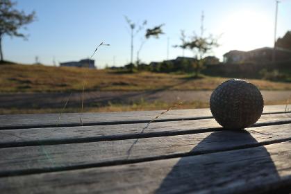 ベンチに置かれた野球ボール