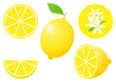 レモンのフルーツカットと花のセット