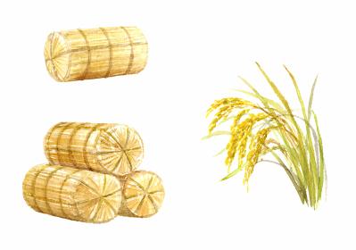 米俵と稲のセット 水彩画