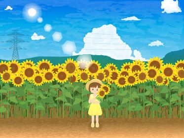 ヒマワリと少女 青空風景