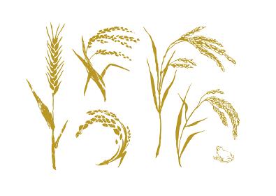 麦と米 稲穂 セット 筆絵 イラスト