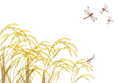 金色の稲穂 米 とんぼ 水彩 イラスト