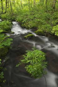 春の森を流れる清流