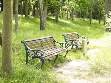 新緑の公園ベンチ