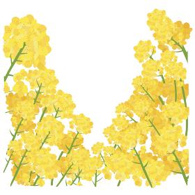 イラスト素材 菜の花 なのはな ナノハナ 花畑 縦構図 ベクター