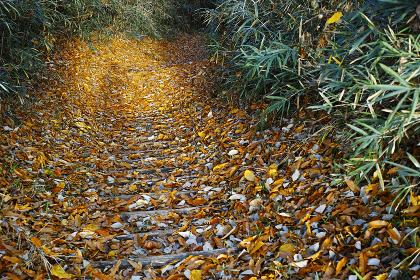 落ち葉が溜まった山道に差し込む日差しと人の影