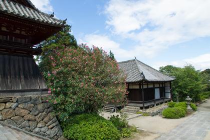 矢田寺 (奈良県大和郡山市 2012/08/04撮影)