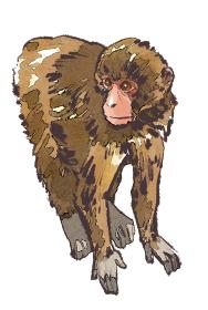 申 猿 さる 小猿 こざる 四つん這い よつんばい