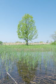春の埼玉県川口市の風景 荒川河川敷 4月