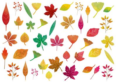 秋の紅葉:カラフルな紅葉した植物のアイコンセット
