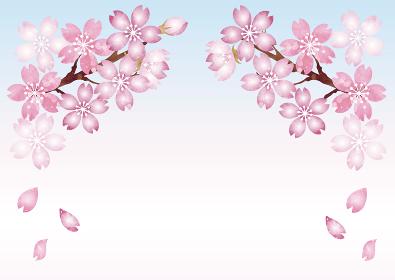 さくら 桜 春 花 水彩 フレーム コピースペース 背景 イラスト素材