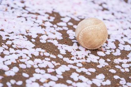 野球ボールと桜の花びら
