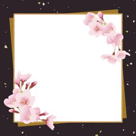 桜の花 和風背景素材 伝統、祝賀イメージ(黒色、正方形)