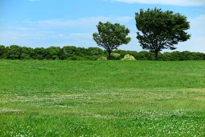 風の強い日の緑地公園(画面右端人工物レタッチ処理あり)