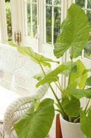 観葉植物のあるガーデンルーム