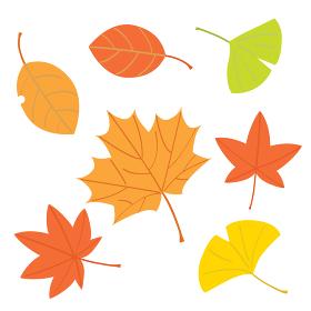 秋の紅葉や楓やイチョウたち