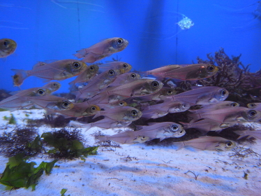深海に住む魚
