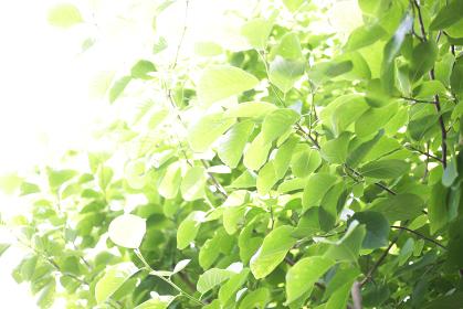 屋外にある可愛い緑の植物