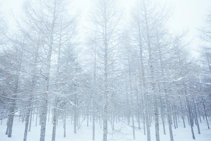 雪景色の森 長野県