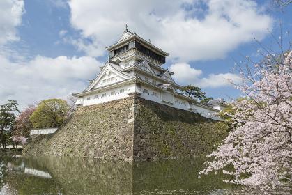 小倉城天守閣と桜 福岡県北九州市