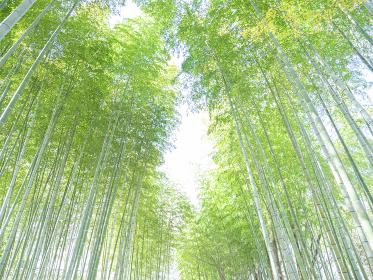 修善寺温泉の竹林