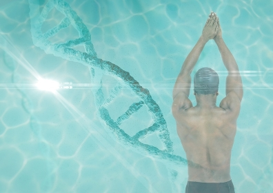Swimmer with a dna chain and pool superposition