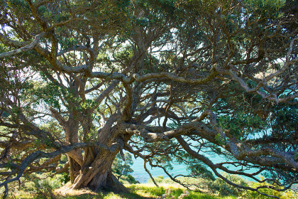 重なり合った大きな木
