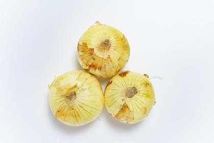 食材 玉葱