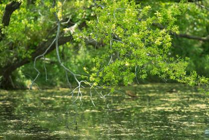 池と新緑の木々 4月