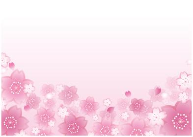 春の桜 植物 和風背景