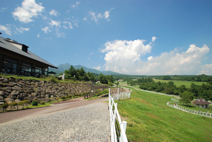 夏の高原の牧場
