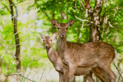 山の中で生きる野生の鹿