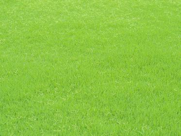 緑が鮮やかな夏の芝生