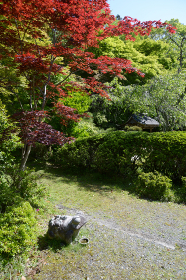 新緑の金蔵寺 庫裏前のカエル 京都市大原野