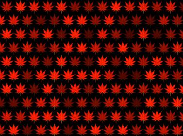 連続した紅葉のパターン 背景画像黒赤