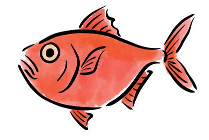 金目鯛 キンメダイ 魚 筆 手描き