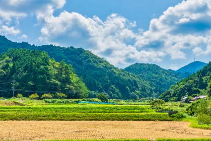夏ののどかな田園風景と山並み